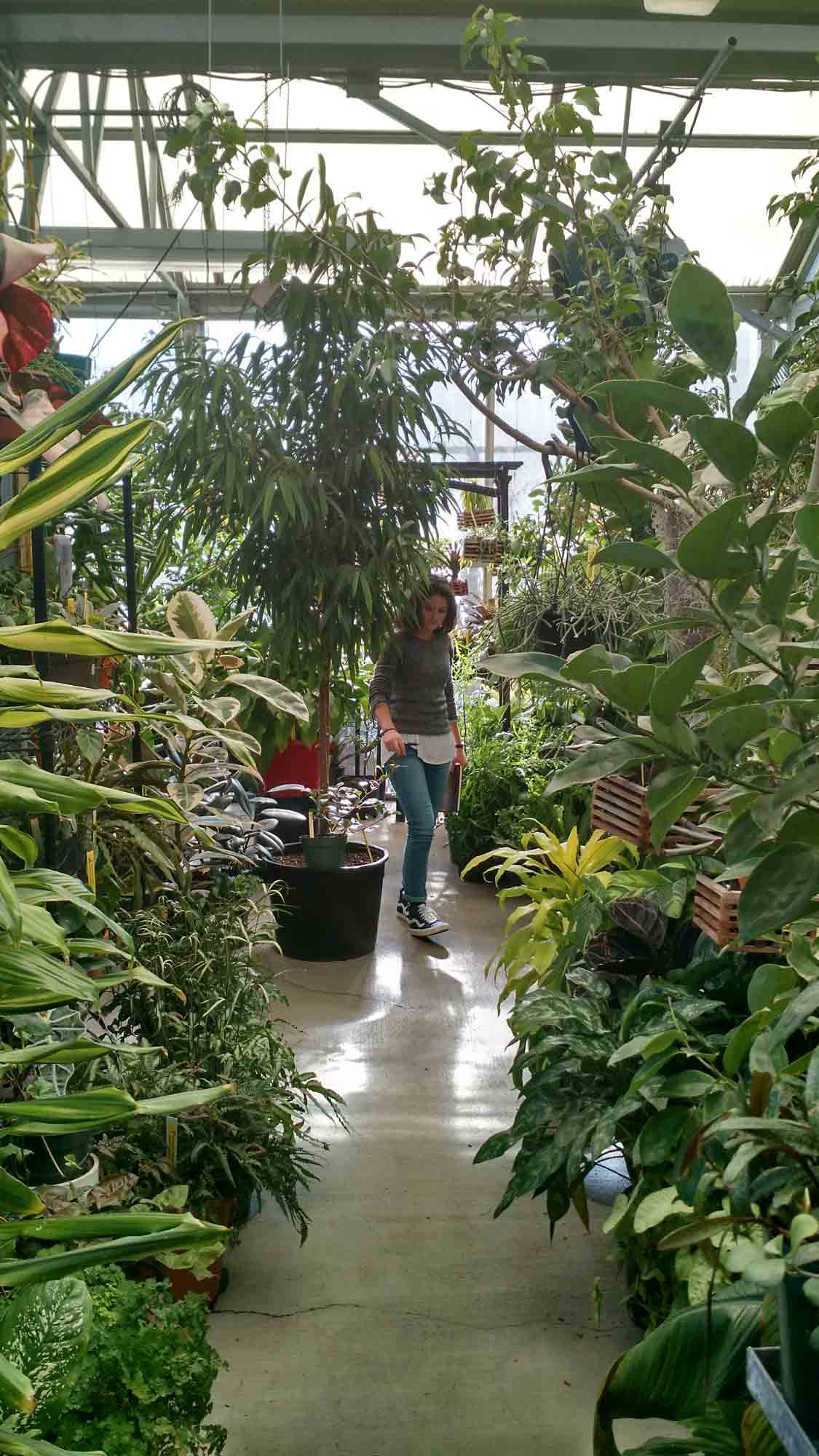 biology greenhouse provides learning opportunities for students and rh theappalachianonline com