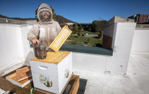 BEE-lieve it: App State named one of 61 Bee Campuses