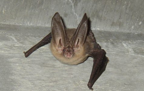 Professor receives $8,000 grant to study bats on Parkway
