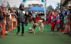 Blowing Rock's Winterfest K-9 Keg Pull is event used to raise money for PARTNERS! Canines, animal rescue service. The program raised $3,000 this year with 82 dogs total in participation.