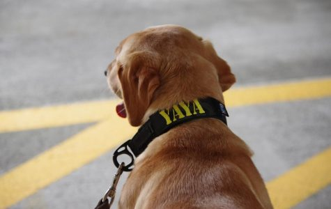 App State Police has a new officer on the job — two-year-old Labrador retriever Yaya, an explosive detection dog.