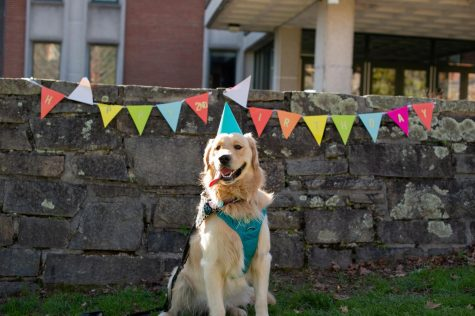 An App State campus celebrity celebrated their birthday Tuesday - Teddy the golden retriever. Teddy patiently posed in front of his birthday banner while waiting for his dog safe birthday cake.