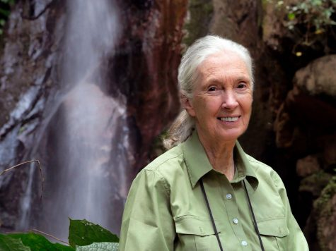 Jane Goodall, known for her research on primates over the last 60 years, spoke with App State students Nov. 18 via Zoom.