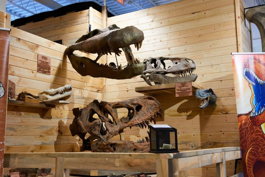 Inside the Appalachian Fossil Museum. The attraction recently moved from Mystery Hill to the Tanger Outlets in Blowing Rock, taking advantage of the larger space to showcase more exhibits.