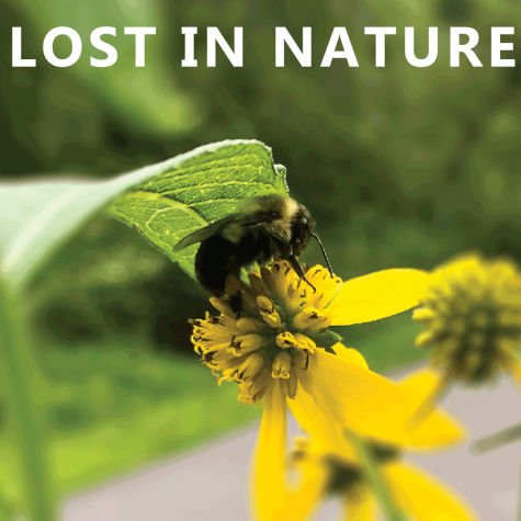 Playlist of the week: Lost in nature