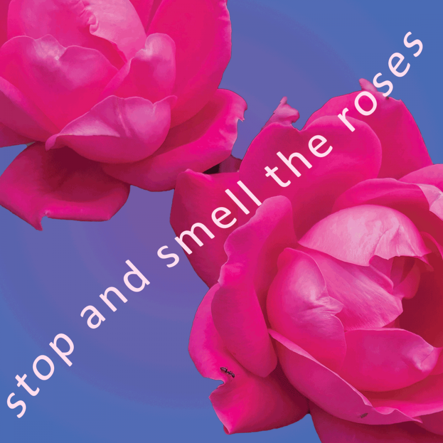 Playlist+of+the+week%3A+Stop+and+Smell+the+Roses
