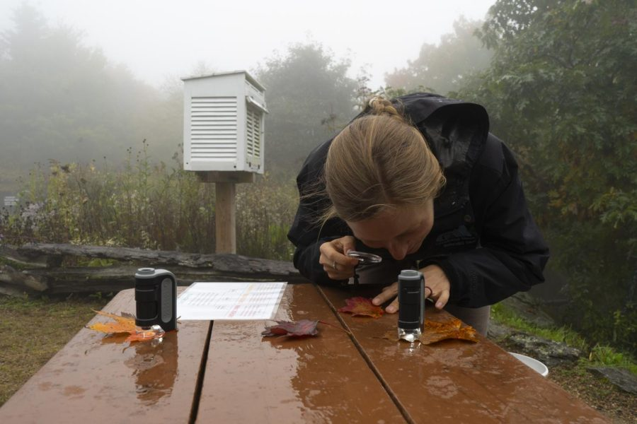 Cassie Petrilla, education specialist, inspects a leaf with a magnifying glass during a demonstration included in a tour of Grandfather Mountain.
